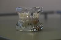 Pierwsza proteza zębowa